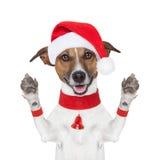 Hello goodbye christmas  dog. Hello goodbye high five christmas  dog with paws up Royalty Free Stock Photo