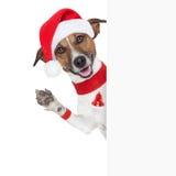 Hello goodbye christmas  dog. Christmas dog as santa behind placard waving with paw Stock Image
