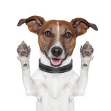 Hello goodbye high five dog. Hands up stock photo