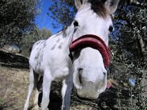 Hello! Greetings from the happy white horse blinking curiously into the camera royalty free stock photo