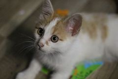 A little kitten is waiting for food stock photos
