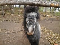 Hello. I am Pony. Little pony in the park Royalty Free Stock Photo