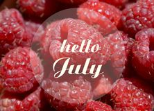 Hello Juli hälsning på naturlig röd mogen hallonbakgrund sommar för snäckskal för sand för bakgrundsbegreppsram Royaltyfria Foton