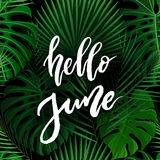 Hello June brush lettering. Royalty Free Stock Photo