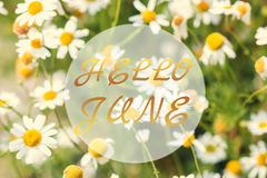 Hello June greeting card, daisy background. Hello June greeting card, sunny, warm daisy background stock images