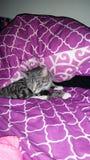Hello kitty Stock Photo