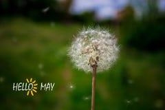 Hello Maj, text med härlig naturplats Royaltyfri Foto