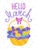 Hello march, greeting card with crocuses in a basket stock illustration