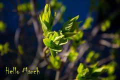 Hello March, message with Beautiful nature scene Stock Photography