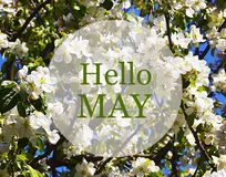 Hello May greeting card with white apple tree blossoms on a blue sky background. Stock Image