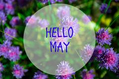 Hello May, message with Beautiful nature scene. Of Blue spring flowers royalty free stock photography