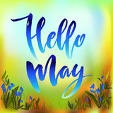 Hello may quote. Calligraphy quote hello may. Handwritten lettering with watercolor background and snowdrop floral border frame, modern brush pen lettering Royalty Free Stock Photos