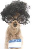 Hello mitt namn är… Nerdy Royaltyfri Bild