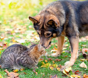 Hello, my friend. Dog and cat playing together outdoor stock photos