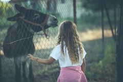 Hello my little donkey. Little girl with donkey on farm. Close up. Copy space stock photos
