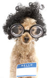 Hello My Name Is...Nerd Royalty Free Stock Images