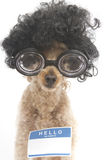 Hello My Name Is...Nerdy Royalty Free Stock Image