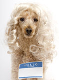 Hello My Name Is...Sticker On Blonde Dog Royalty Free Stock Photos