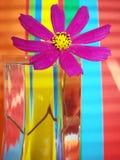 HELLO MY RAINBOW! Royalty Free Stock Photography