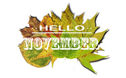 Hello November and autumn background with colored leaves isolate Royalty Free Stock Image