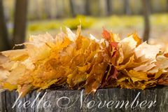 Hello November greeting card. Autumn maple leaves stock image