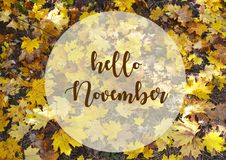 Hello November.Yellow maple leaves background with text.Autumn concept.Fall season. vector illustration