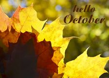 Hello October.Autumn maple leaves background with text.Fall season concept. Hello October.Autumn maple yellow leaves background with text.Fall season concept stock image