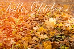 Hello October greeting card. Autumn maple leaves royalty free stock photos