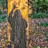 Hello. Person says hello by means of a shadow on a tree Royalty Free Stock Images