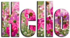Hello Pink flowers Stock Photography