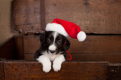 Hello puppy with christmas stock image