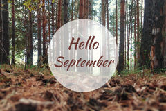 Hello September greeting card with pine trees in background. Hello September greeting card with pine trees and pine cones in background stock photo