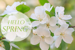 Hello spring background, blooming apple tree royalty free stock photos
