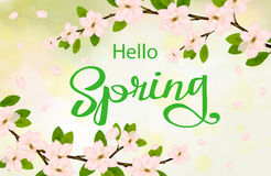 Hello spring background with cherry blossoms royalty free stock photo