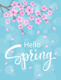 Hello spring background with cherry blossoms flowers Royalty Free Stock Images