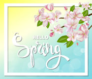Hello spring background with cherry blossoms, leaves and branches. Stock Photography