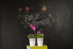 Hello spring background. Flowers and drawing on black board hello spring scene background Royalty Free Stock Photography