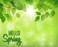 Hello spring background with fresh green leaves. Illustration of Hello spring background with fresh green leaves royalty free illustration