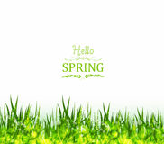 hello spring background with grass Stock Photography