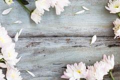 Hello spring Background. Hello spring on white Background Stock Photos