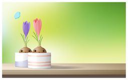Hello Spring background with Spring flower Crocuses on wooden table top Royalty Free Stock Images