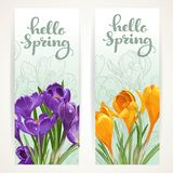 Hello spring banners with yellow and purple crocuses Stock Image