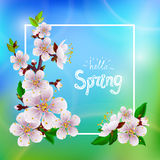 Hello spring. Beautiful spring background with branch of blossoming apricot and the words `Hello Spring stock illustration