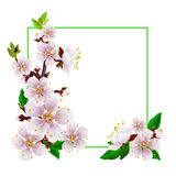 Hello spring. Beautiful spring frame with branch of blossoming apricot on a white background. Design elements for cards or invitations royalty free illustration