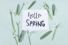 Hello spring calligraphy note decorated with snowdrops on light. Green background royalty free stock images