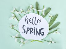 Hello spring calligraphy note decorated with snowdrops on light. Green background royalty free stock photos