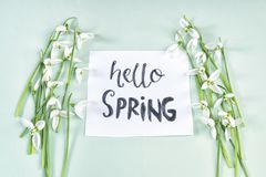 Hello spring calligraphy note decorated with snowdrops on light. Green background royalty free stock photography