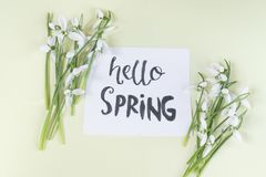 Hello spring calligraphy note decorated with snowdrops on light. Yellow background royalty free stock photography