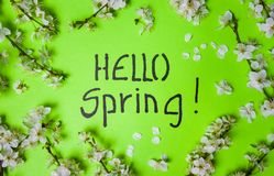 Hello spring card with cherry blossom flowers. Flat lay note greeting green background table beautiful decoration seasonal beauty nature leaf plant petal bloom stock photo
