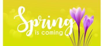 Hello spring. Crocuses Royalty Free Stock Photo